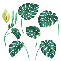 Stylized monstera leaves. Decorative image of tropical foliage and flower. Objects for decoration, design on advertising booklets, banners, flayers