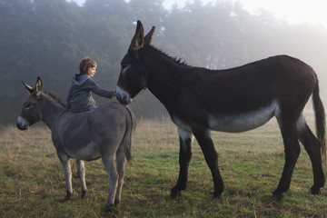 Rear view of girl touching mule while sitting on donkey at field