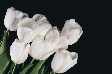 tinted image bouquet of a white tulips on a dark background. hor