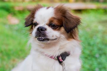 cute dog,cute puppy