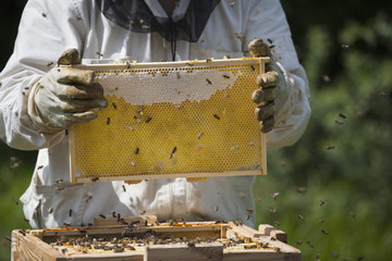 Midsection of beekeeper holding honeycomb at farm