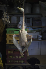 Dead goose hanging in butcher's shop