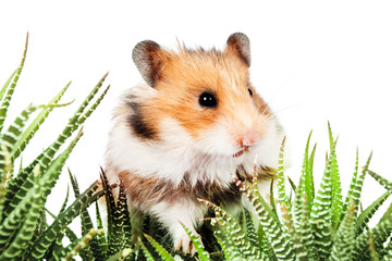 Hamster sitting in the green leaves of cactus