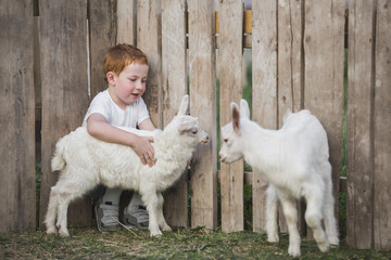 Young boy playing with baby goats in park