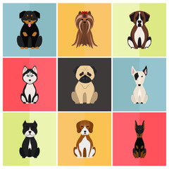 Dogs color flat set icon