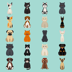 Cats and dogs color flat icon