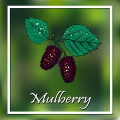 Mulberry vector illustration. Berry poster, banner