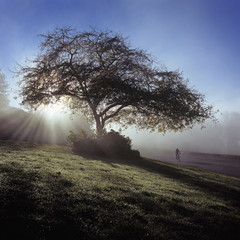 Scenic view of roadside tree during sunrise