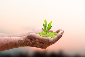 We love the world of ideas, man planted a tree in the hands.Background blue sky