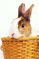 Spotted bunny in a basket on white wooden background