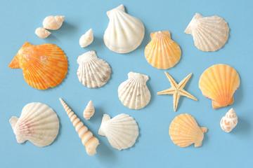 夏イメージ 貝殻とヒトデ 水色背景