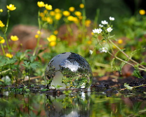 The ball in the water. Green water, forest flowers. Glass - a material, concepts and themes, environment, nature, renewable resources