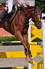 Im Sprung über die Hürde, Pferd mit Reiter