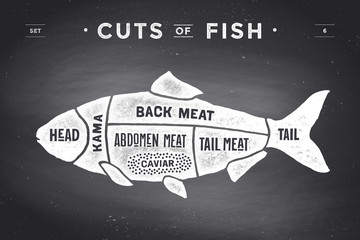 Cut of meat set. Poster Butcher diagram and scheme - Fish. Vintage typographic hand-drawn on a black chalkboard background. Vector illustration