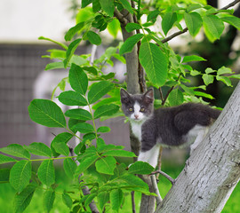Young kitten on the tree