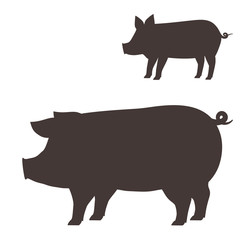 Big and small pig.