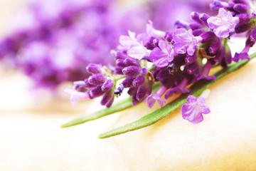 Lavender, Lavendel, Lavendelblüten, auf Stein, Copyspace