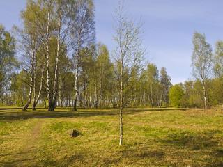 лес в солнечный день