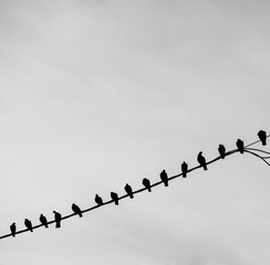 Group of birds on wire against sky with clouds
