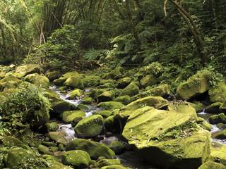 stream Da Gou Xi through mossy rocks in forest