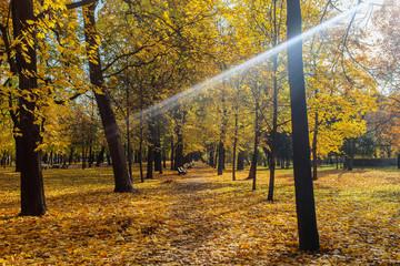 sunbeam in the autumn