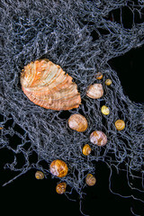 mussels and snail shells on a fishing net