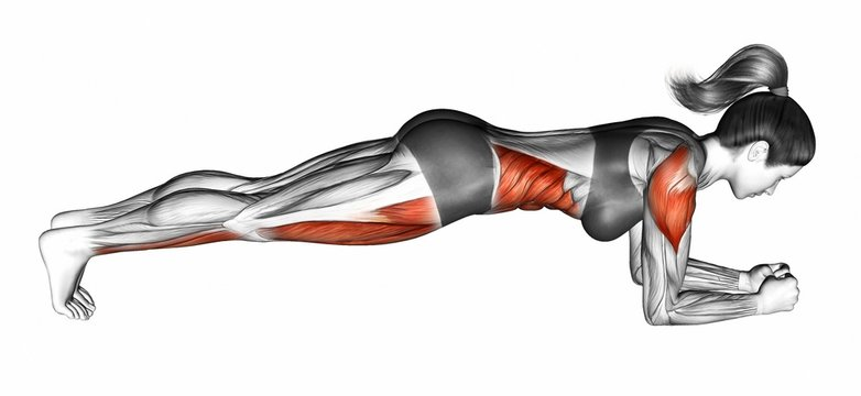 Elbow plank. Exercising for Fitness. Target muscles are marked in red. Initial and final steps. 3D illustration