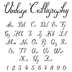 Vintage Calligraphic Script Font vector letters numbers Symbols