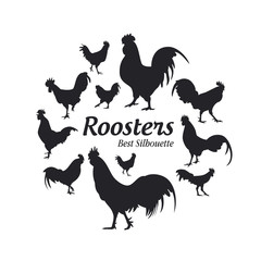 Rooster silhouette on the white background