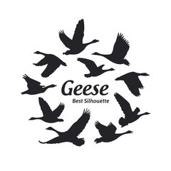 Geese silhouette on the white background
