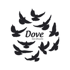 Dove silhouette on the white background