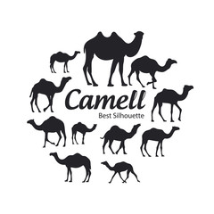 Camel silhouette on the white background