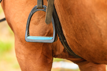 Closeup of horse and stirrup.
