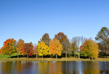 Fototapete - Row of Colorful Trees Along Lake in Autumn.