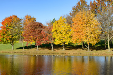 Fototapete - Lake with Ducks and Colorful Fall Trees