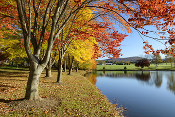 Fototapete - Colorful Autumn Landscape of Lake in Park