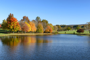Fototapete - Beautiful Lake and Trees in Autumn