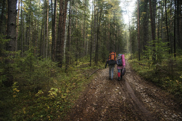 Rear view of two hikers walking along dirt road in forest