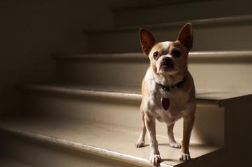 Portrait of dog on steps