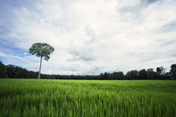 Green field with single tree