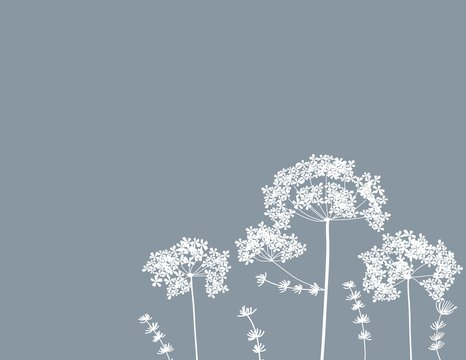 queen anne's lace flower baby breath floral free-hand vector background