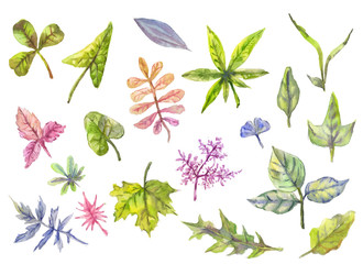 Collection of floral elements, leaves in watercolor