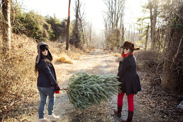 Portrait of friends carrying christmas tree through forest