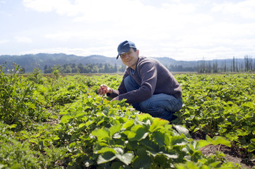 Portrait of farmer crouching in strawberry field