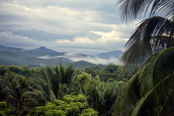 Landscape with rainforest and mountains