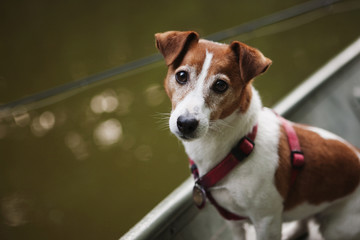 Portrait of cute dog in boat