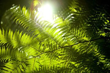 Close up of ferns
