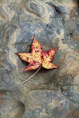 overhead view of maple leaf on tree stump