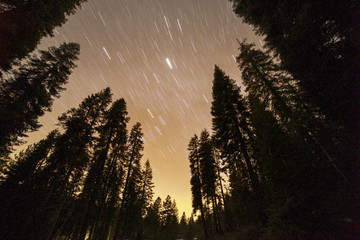 Low angle view of tree against star trails in sky at dawn