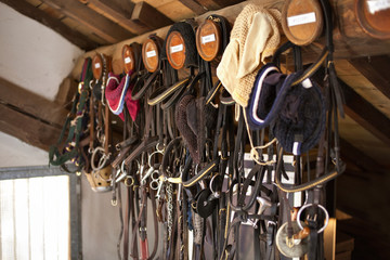 Bridles hanging on wood in stable